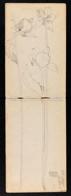 Hunterian Art Gallery Mackintosh collections: GLAHA 53012/8 Dahlia.