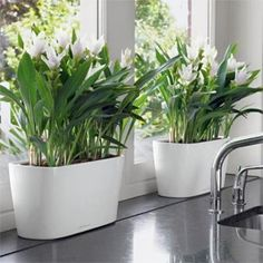 Self Watering planter, fantastic idea From : Brokstone | Products I ...