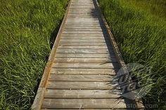 wooden deck pathways | alberta, canada; a wooden sidewalk | Stock Photo 4029R-218571 ...