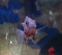 22 best fish and fish tanks images fish tanks aquariums aquarium