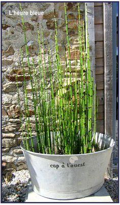 IDEE: Dans mon jardin, une grande bassine ovale en ZINC, de la prêle, j'ai écrit avec des stickers CAP A L'OUEST.... Isaela