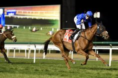 Balanchine victory highlights Bin Suroor Carnival treble : International Horse Breeding and Racing news updated daily, www.thoroughbrednews.com.au