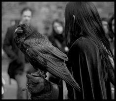 black birds  //  Onirography