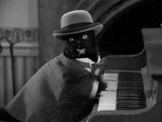 love you pianist cat xoxo