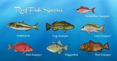 Deep Sea Fish List - Bing images Fish List, Deep Sea Fishing, Pacific Ocean, Bing Images