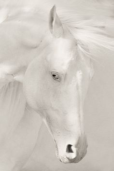 Beautiful creatures, animals beautiful, beautiful horses, white magic, al. All The Pretty Horses, Beautiful Horses, Animals Beautiful, Beautiful Beautiful, Zebras, Wilde Mustangs, Animals And Pets, Cute Animals, Art Beauté