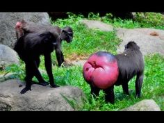Funny Animal Mating - Animal Mating Best Moment Compilation