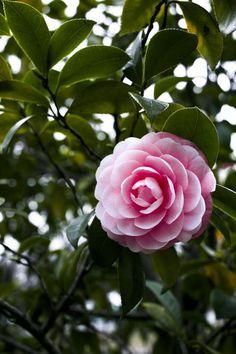 Winter Plants, Winter Flowers, Winter Garden, Summer Flowers, Winter Rose, Deep Winter, Vegetable Garden For Beginners, Gardening For Beginners, Garden Tips