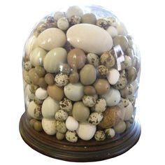 Large 19th century Glass Dome with Birds' Eggs