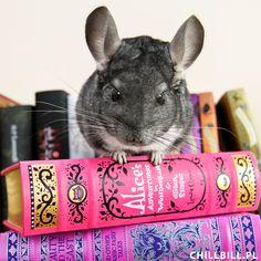 Egon i książki :)
