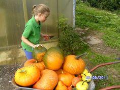 Ernte bei den kleinen Gärtnern. Pumpkin, Vegetables, Outdoor, Food, Harvest, Things To Do, Creative, Outdoors, Buttercup Squash