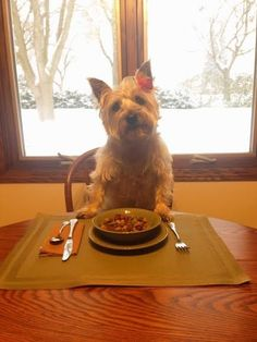 Sophie places her utensils in the right positions because she knows how much that means to you.  Cairn Terrier. Dog. Funny. LOL.