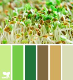 Color: Sprouting Hues by Design Seeds - light green, medium green, kelly green, brown, beige, grey-green.