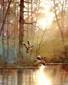 Duck Art Print of Watercolor Painting by Master Artist by TCChiu