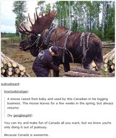 Even the moose are loyal in Canada, unlike most people in America