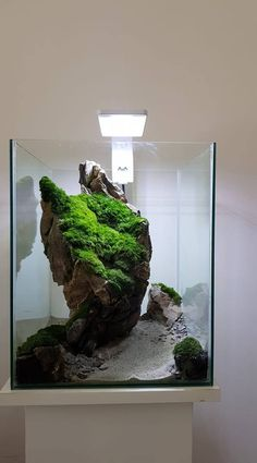 Who Knew Home Landscaping for Energy Conservation Had This Effect? Aquarium Aquascape, Aquascaping, Aquarium Landscape, Saltwater Aquarium, Aquarium Fish Tank, Planted Aquarium, Freshwater Aquarium, Aquarium Design, Fish Tank Design