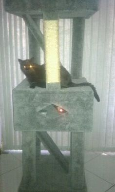 Made to order cat stand for injured or elderly that can not jump. Ramps to each level with peek a boo box. Please excuse the shiny eyes.