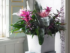 Här är de tio bästa krukväxterna för ett garanterat blommigt hem utan gröna fingrar eller tid för omvårdnad. Lär känna de mest lättskötta, tåliga långblommarna.