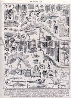 Prehistoric Dinosaurs black and white antique French Print $10 in Beats925Books store on Etsy