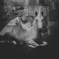 Fantasy Norse Horse Unicorn.