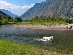 River Chulyshman/Mt Altai/Река Чулышман. Горный Алтай.