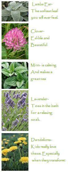 sensory garden plants2