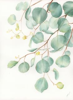 """""""Eucalyptus Leaves"""" by Cecilia Xiao. Paintings for Sale. Watercolor Wallpaper, Watercolor Print, Watercolor Flowers, Watercolor Paintings, Line Art Flowers, Flower Art, Botanical Art, Botanical Illustration, Beste Iphone Wallpaper"""