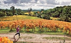 California's Wine Trail