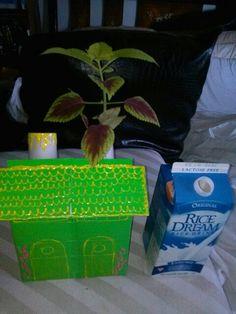 Cajas de carton y botellas de vidrio,para reciclar y tener plantas decorativas en ella,natural y hermoso,en un lugar de la casa.