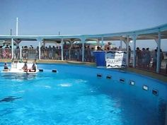 This is the large Dolphin Show at the Gulfarium in Fort Walton Beach, Florida.