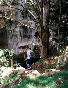 A tramper passes by a cave entrance at Waipu Caves Walk. Cave Entrance, Parks And Recreation, Beach Fun, Caves, Exploring, Things To Do, Waterfall, Places To Visit, Around The Worlds