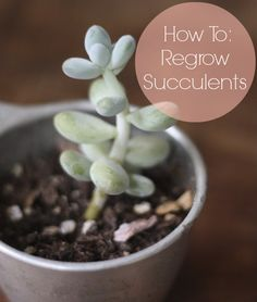 How To: Grow