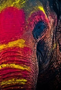 elephant eye  # Wild Elephants multicityworldtravel.com We cover the world over 220 countries, 26 languages and 120 currencies Hotel and Flight deals.guarantee the best price