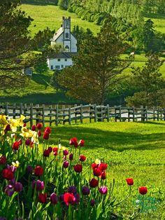 PRINCE EDWARD ISLAND, CANADA #nature #flowers #canada #travel #medow