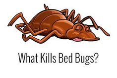 Here for effective for bed bug removal in Toronto , you will need to bag all your clothing and store things in your garage or car. After this, everything including food products needs to be removed and stored off the premises.