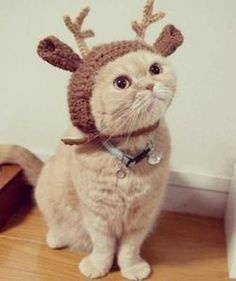 cat #Christmas #Handmade