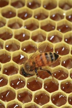bee works the cells