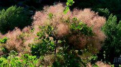 Du vent dans les sumacs - Volets ou vers