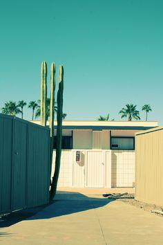 Palm springs, house, cactus, summer, retro,
