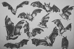 BATFLASH pra vocês ❤️ Desenhos disponíveis! Agendamentos por reptilewings@hotmail.com #tattoo #drawing #flashtattoo #bat #battattoo #daquelalaia #laiacrew #blackworkers