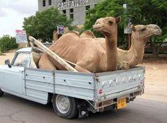 Transporte extremo 8