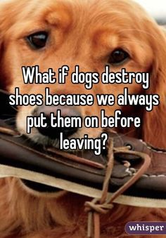 What if dogs destroy shoes because we always put them on before leaving?