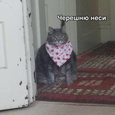 Russian Cat, Russian Memes, Cat Memes, Dankest Memes, Cute Cats, Funny Cats, Hello Memes, Bad Cats, Funny Video Memes