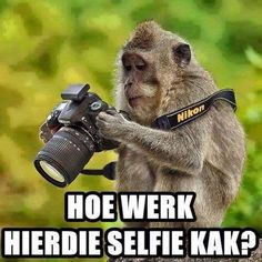How does this selfie shit work? #southafrica #selfie #wildlife - Enjoy the Shit South Africans Say! #CapeTown #africa #comedy #humor #braai #afrikaans