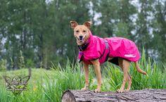 ZoePhee: An Awesome Raincoat: Hurtta Torrent Coat