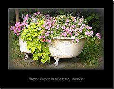 beautiful garden in a vintage bathtub