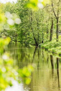 Vehreä Tourujoen luonnonsuojelualue Kankaan läheisyydessä. / Lush vegetation in Tourujoki nature reserve.