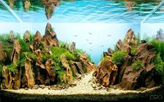 """What is aquascape? Aquascape (from """"aqua"""" - water and """"scape"""" - landscape) is the art of creating compositions or landscapes in an aquarium. Aquascaping, Planted Aquarium, Aquarium Landscape, Nature Aquarium, Aquarium Rocks, Aquariums, Conception Aquarium, Tank Warfare, Neon Tetra"""