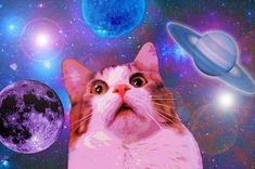 Kedi Forumlarında Karşılaştığımız Beyin Yakan Sorular