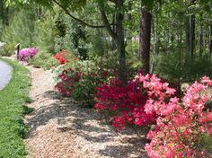 Google Image Result for http://www.annmariegarden.org/annmarie2/files/azaleas2.png